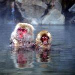 Онсэны в Японии (горячие геотермальные источники)