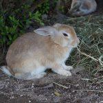Окуносима — кроличий остров в Японии: фото, история, обзор, как добраться до острова