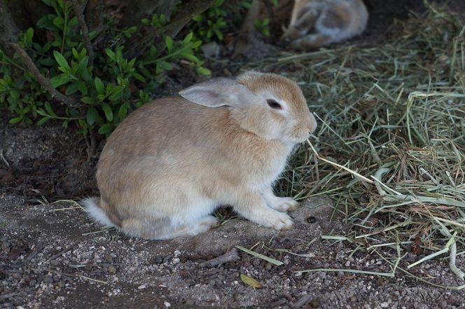 окуносима кроличий остров в японии