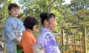 Пенсия в Японии по старости